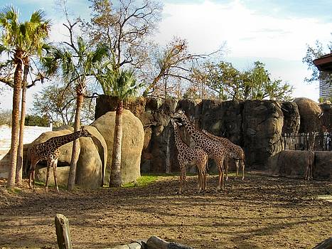 Zoo yard by Camera Candy