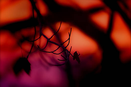 Zora Boja by Greg Collins