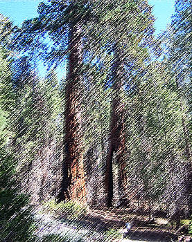 010219 Red Woods California by Garland Oldham