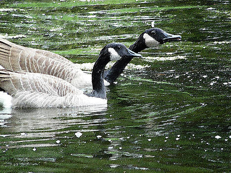 031619 Geese City Park New Orleans by Garland Oldham