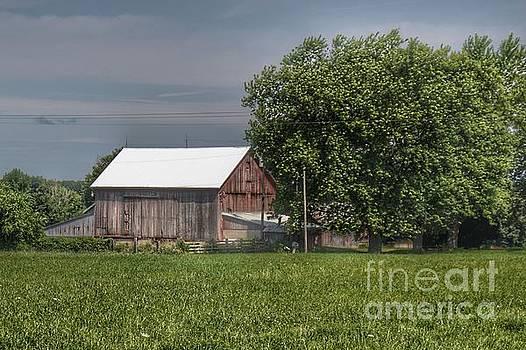 0336 - Castle Road Cow Barn III by Sheryl L Sutter
