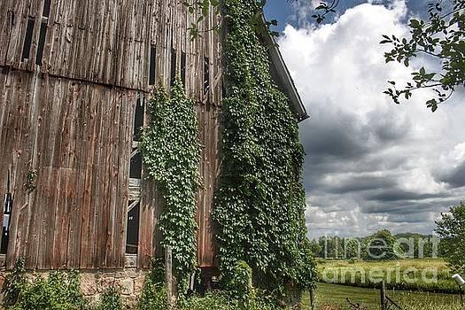 0358 - North Branch's Ivy Grey by Sheryl L Sutter