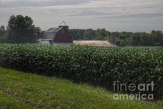 0364 - Pierson Road Red Above the Corn by Sheryl L Sutter
