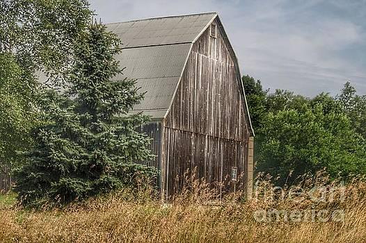 0368 - Seymour Lake Road Hidden Grey by Sheryl L Sutter