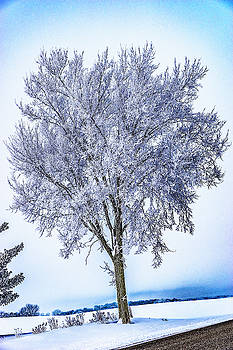 039 - Frosty Tree by David Ralph Johnson