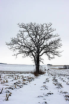 046 - Lone Tree by David Ralph Johnson