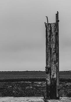 All That Remains by Odd Jeppesen