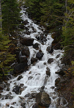 Alpha Creek Falls by Whispering Peaks Photography