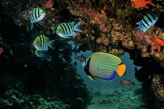 Amazing Fish swim in the Red Sea by Avner Efrati