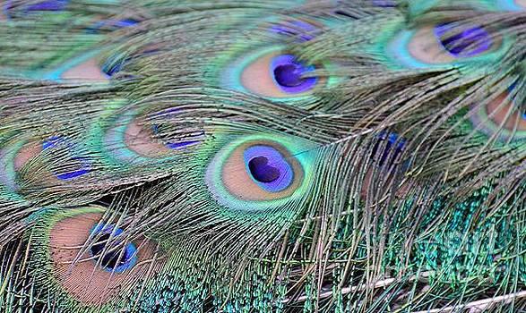 An Eye for an Eye by Debby Pueschel