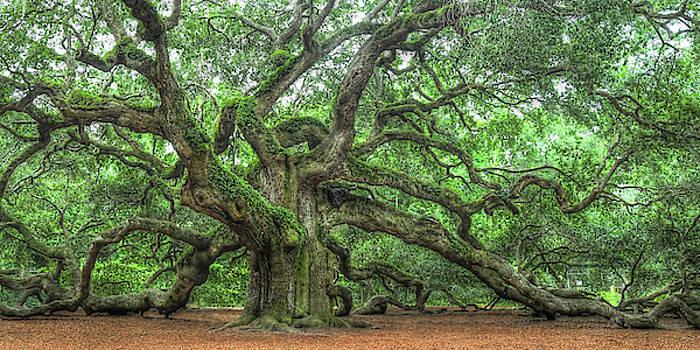 Angel Oak - Tree of Life - Johns Island by Don Mennig