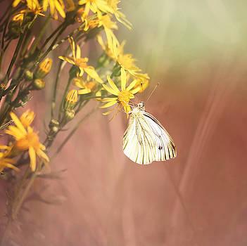 Around The Meadow 3 by Jaroslav Buna