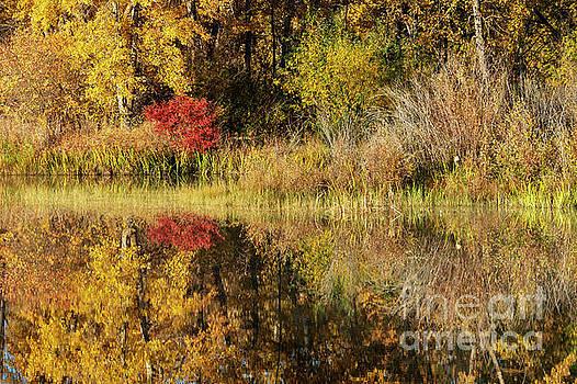 Autumn Illusion by Mike Dawson