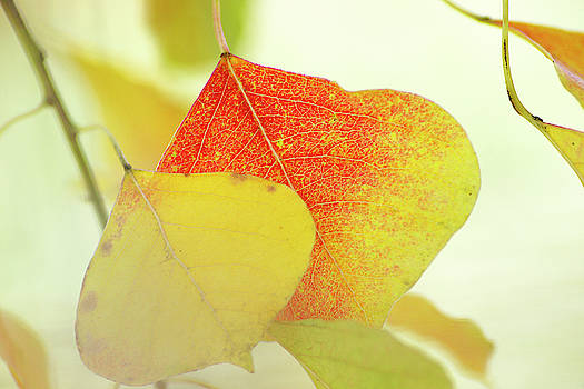 Autumn Leaves by Bill Morgenstern