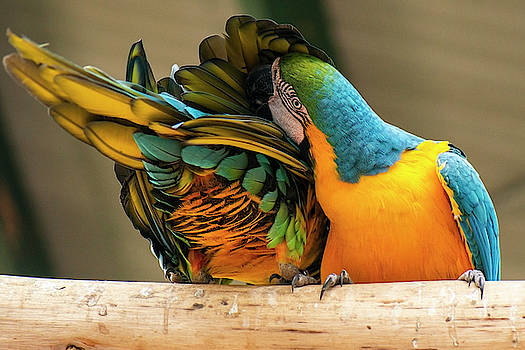 Beautiful Macaw birds by Rob D Imagery