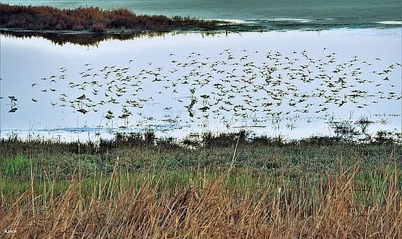 Bird Reflection XX by John R Williams
