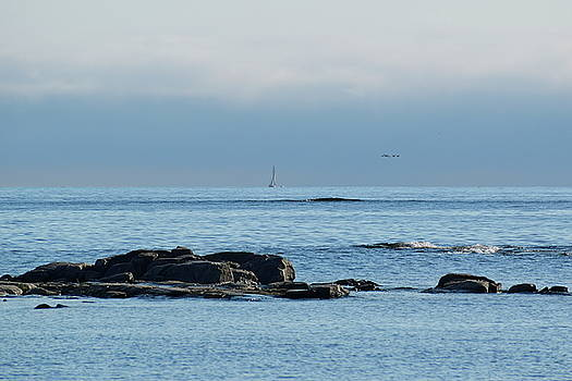 Birds flying over the ocean while two boats are cruising at the horizon by Ulrich Kunst And Bettina Scheidulin