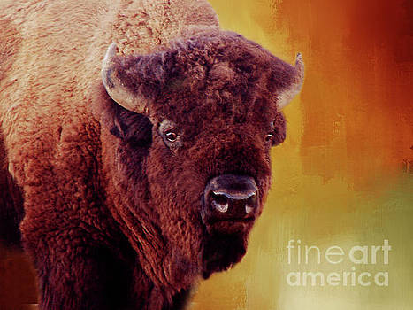 Bison by Linda Cox