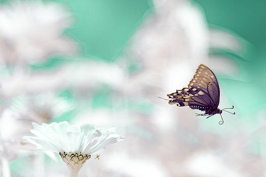 Black Swallowtail Infrared by Brian Hale