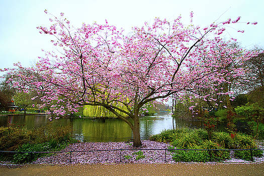 Blossom by Martin Newman