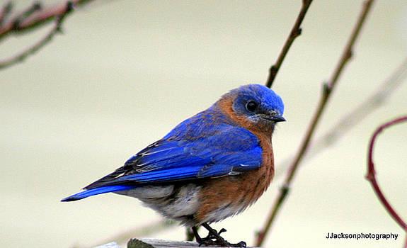 Bluebird by Jonathan Jackson Coe