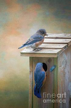 Bluebirds by Warrena J Barnerd
