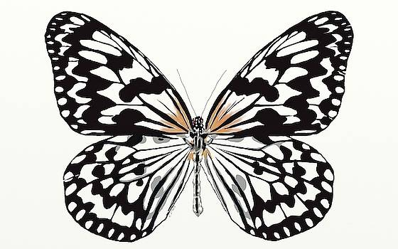 Butterfly by Ronni Dewey