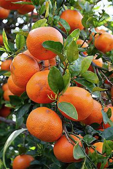 California Citrus State Park by Kyle Hanson