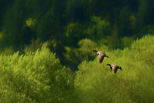 Mike Penney - canada geese 4