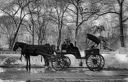 Central Park Carriage by Jeff Watts
