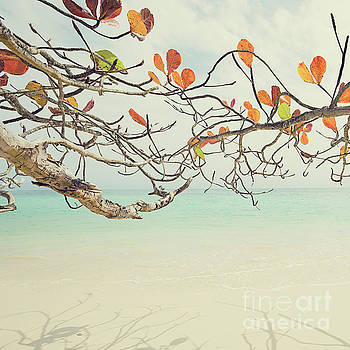 Colorful Tree North Shore by Charmian Vistaunet