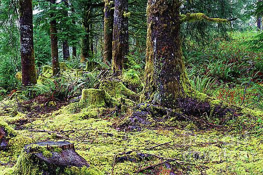 Forest Understory Yellow Green Moss by Robert C Paulson Jr
