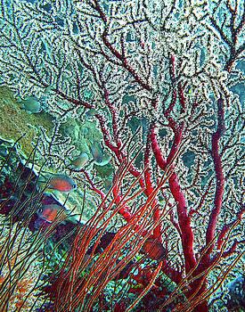 Susan Burger - Coral Beauty
