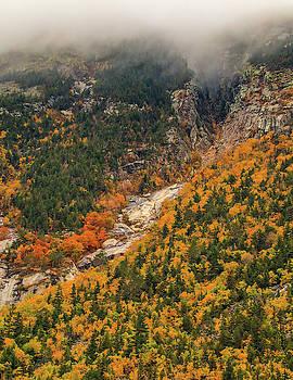 Crawford Notch Fall Foliage by Dan Sproul