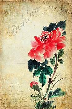 Dahlia by John Edwards