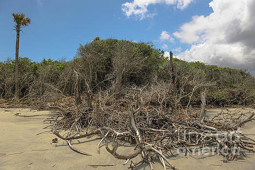 Dead Wood Beach by Dale Powell