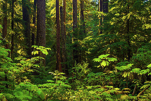 Deep Forest by Brian Knott Photography