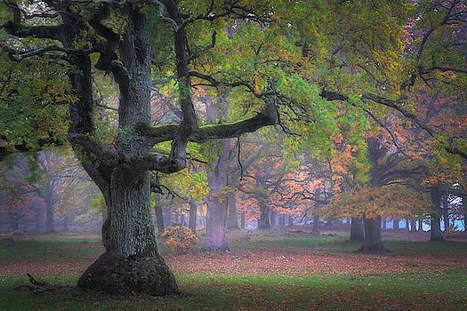 Dreamland by Ludwig Riml