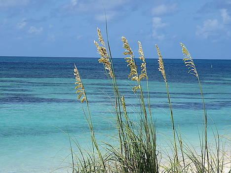 Dry Tortugas Sea Oats #2 by Julie Harrington