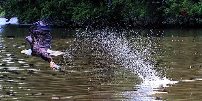 Brian Cole - Eagle Fishing