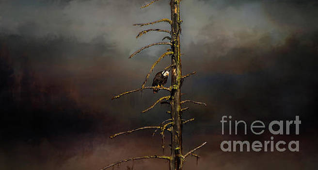 Eagle Watching by Janie Johnson