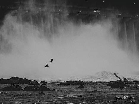 Eagles in the Mist by Shawn M Greener