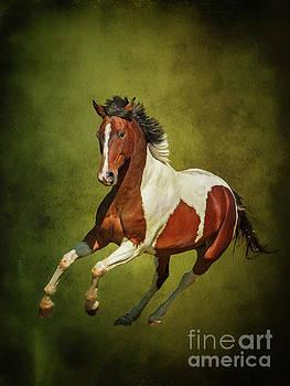 Equus Caballus... by Nina Stavlund