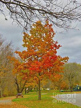 Fall beauty by Brenda Ketch