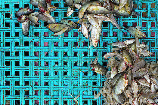 Fish at the Market by Nicole Young