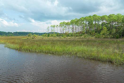 Florida Marshland by John M Bailey