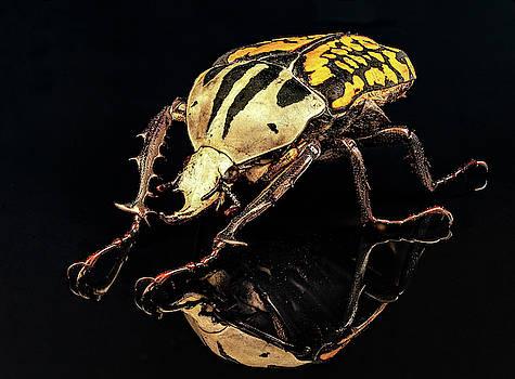 Flower Beetle by Gary Shepard