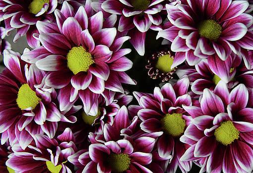 Whispering Peaks Photography - Flower Power
