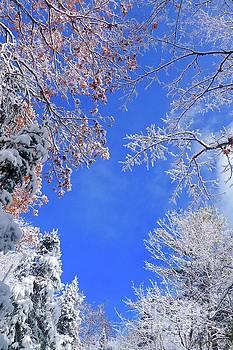 Frosty Morning by Sandra Updyke