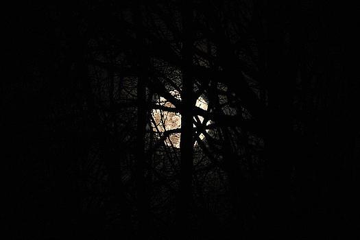 Full Moon by David Stasiak
